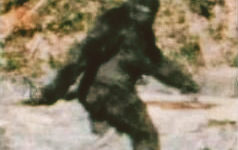Frame 352 of the Patterson-Gimlin film, alleged to depict a female Bigfoot